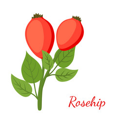 rosehip herbal plant cartoon flat style vector image vector image