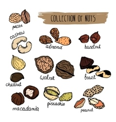 Nuts type hand drawn collection of nuts vector image