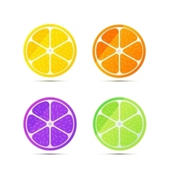Set of glossy fruit slices on white vector image