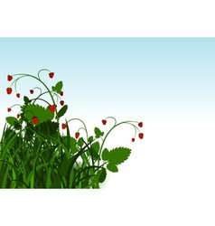 Wild strawberry bush vector