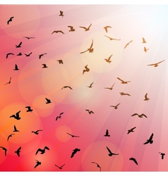 Birds seagulls black silhouette on pink vector