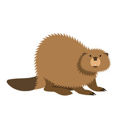 cute beaver kids cartoon vector image