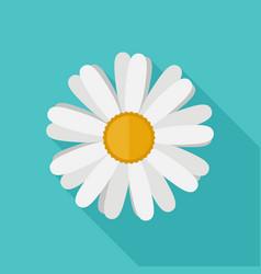 daisy flower flat icon vector image