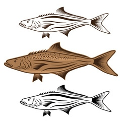 cod fish design template vector image