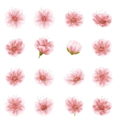 Sakura flowers icon set isolated eps 10 vector
