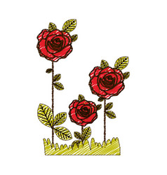 Color pencil drawing of flowered roses planted vector