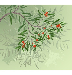 Branch with red berries vector