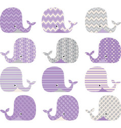 Purple and grey cute whale collections vector