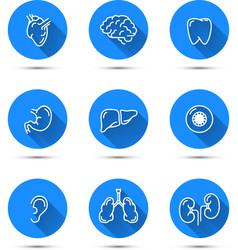 White outline icons of humans organs on blue vector