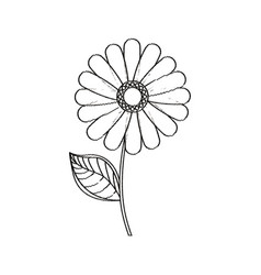 flower daisy floral decoration sketch vector image vector image