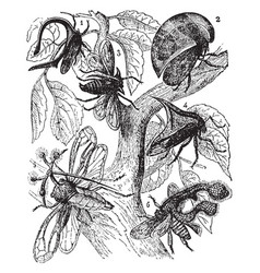 Bugs vintage vector