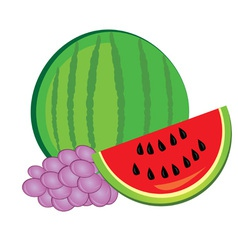 fresh watermelon and grapes vector image