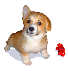 low-polygon drawing of welsh corgi vector image