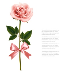 Single pink rose with bow isolated on white vector image
