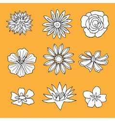 Set of flower isolated vector