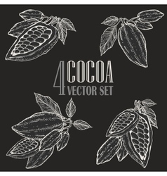 Hand painted cocoa botany set vector