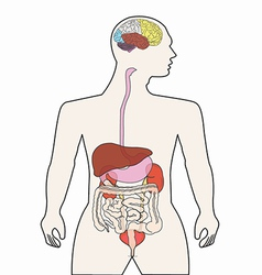 Human body organ vector