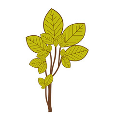 Ramifications with green leaves nature icon vector