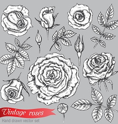 Set of roses and leaves hand drawn vector image