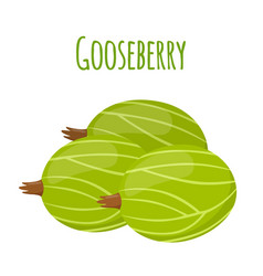 Fresh berries sweet gooseberryflat vegetarian fo vector