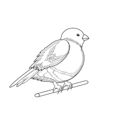 A monochrome sketch of a bird bullfinch vector image vector image