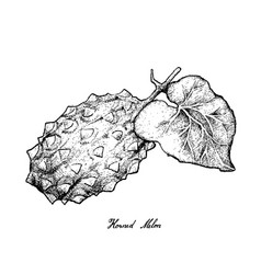 Hand drawn of horned melon or kiwano vector