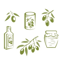 Healthy olives and olive oil vector image
