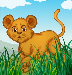 a cub in nature vector image vector image