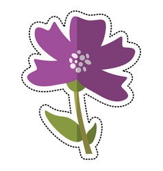cartoon periwinkle flower decoration image vector image