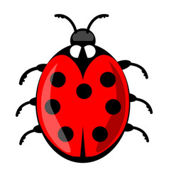 cute ladybug cartoon isolated on white background vector image