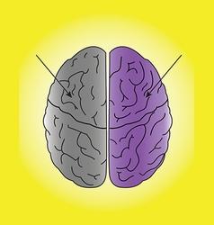 human brain vector image vector image