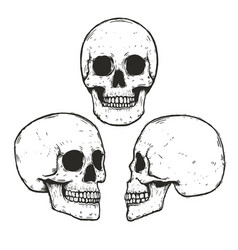 set of hand drawn monochrome skulls vector image