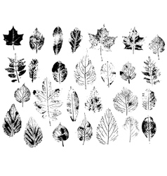 Set with stamp leaves Objects isolated on white vector image vector image