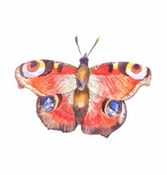 watercolor butterfly aglais io isolated on white vector image vector image