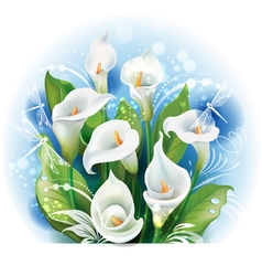 Bouquet of White Calla lilies vector image
