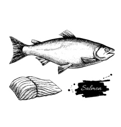 Vintage salmon drawing hand drawn vector