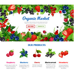 fruit and berry poster for organic food design vector image vector image