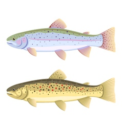 Rainbow trout and brown trout vector image vector image