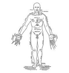 front view of the parts of the human body labeled vector image vector image