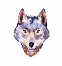 Watercolor wolf portrait of wild animal vector