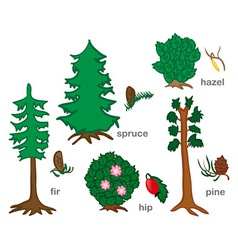 Conifers and shrubs vector