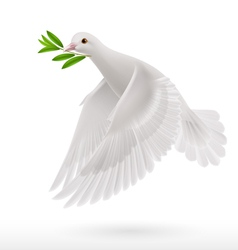 Fly dove vector