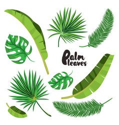 cartoon tropical palm leaves set vector image