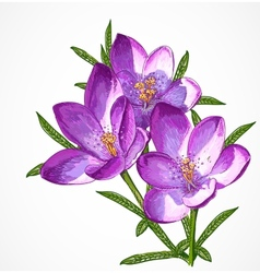 Crocus Spring Flowers for your design vector image