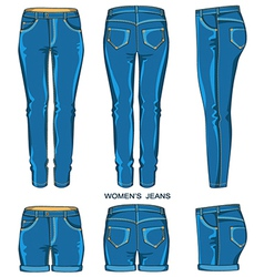 Women jeans pants and shorts vector