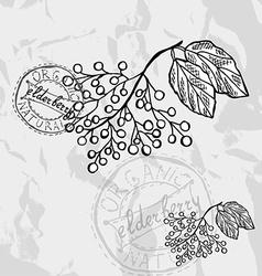 Hand drawn berries vector