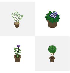Isometric flower set of flowerpot fern flower vector