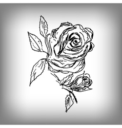 Rose flower by hand vector