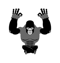 Gorilla meditating Wild animals on white vector image vector image