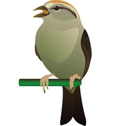 Little bird perched on twig vector
